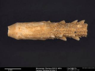 To NMNH Paleobiology Collection (USNM PAL.232503 2)