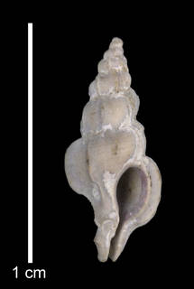 To NMNH Paleobiology Collection (IRN 3171795)