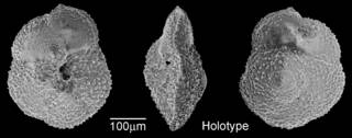 To NMNH Paleobiology Collection (IRN 3148134)