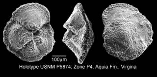 To NMNH Paleobiology Collection (IRN 3155688)