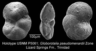 To NMNH Paleobiology Collection (IRN 3155407)