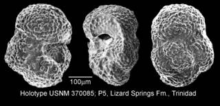 To NMNH Paleobiology Collection (IRN 3151779)