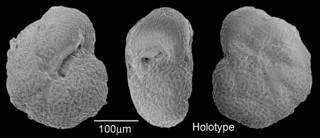 To NMNH Paleobiology Collection (IRN 3155584)