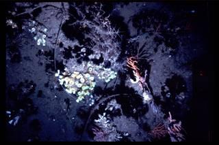 To NMNH Extant Collection (IZ 3151 Photo Slide)