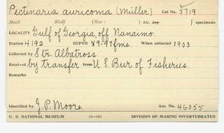 To NMNH Extant Collection (WRM USNM 5719 Pectinaria auricoma Card.)