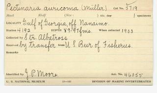 To NMNH Extant Collection (WRM USNM 5719 Pectinaria auricoma Card.)