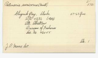 To NMNH Extant Collection (WRM USNM 5721 Pectinaria auricoma Card.)