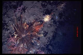 To NMNH Extant Collection (IZ 3212 Photo Slide)