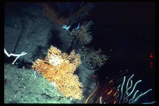 To NMNH Extant Collection (IZ 3224 Photo Slide)