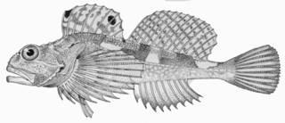 To NMNH Extant Collection (Artedius notospilotus P01290 Illustration)