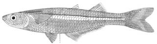 To NMNH Extant Collection (Coleotropis blackburni P03358 illustration)