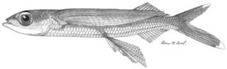 To NMNH Extant Collection (Cypselurus autoncichi P03964 illustration)