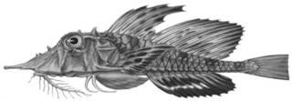 To NMNH Extant Collection (Gargariscus semidentatus P07820 illustration)