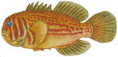 To NMNH Extant Collection (Gobiodon P15422 illustration)