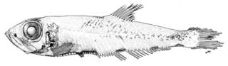 To NMNH Extant Collection (Sonoda paucilampa P05365 illustration)