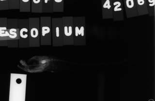 To NMNH Extant Collection (Epigonus telescopus USNM 42069 radiograph lateral view)