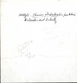 To NMNH Extant Collection (Chromis caeruleus P03131 reverse transparency print)