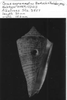 To NMNH Extant Collection (IZ MOL 173213 Ventral)