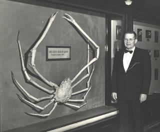 To NMNH Extant Collection (USNM 63653 Macrocheira kaempferi on exhibit with Dr. Waldo L. Schmitt)