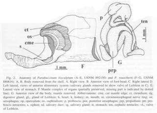 To NMNH Extant Collection (Fig. 2F-G. Anatomy)