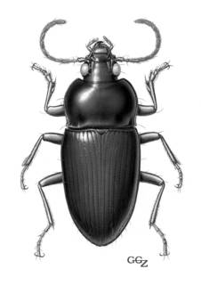 To NMNH Extant Collection (Illustration 000037)