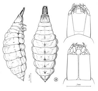 To NMNH Extant Collection (Illustration 000120)