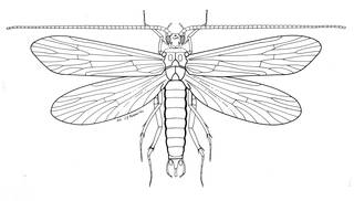 To NMNH Extant Collection (Illustration 000748)