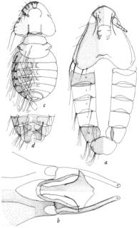 To NMNH Extant Collection (Illustration 001022)