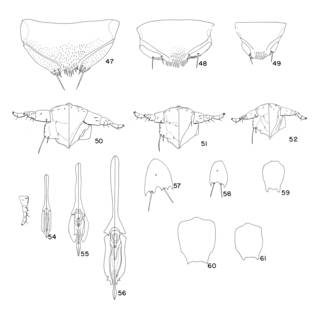 To NMNH Extant Collection (Illustration 001204)