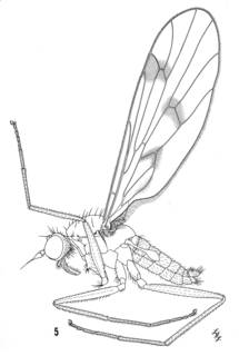 To NMNH Extant Collection (Illustration 002544)