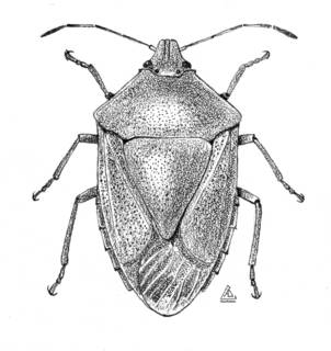 To NMNH Extant Collection (Illustration 002160A)