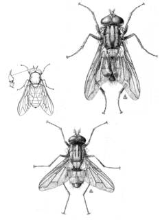 To NMNH Extant Collection (Illustration 002207)