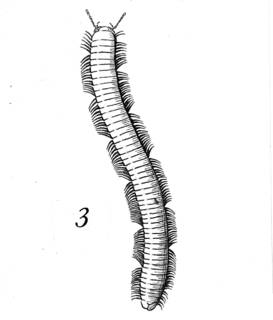 To NMNH Extant Collection (Illustration 002292)