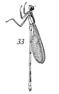To NMNH Extant Collection (Illustration 002306)