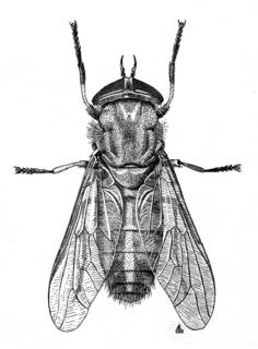 To NMNH Extant Collection (Illustration 002378)