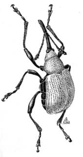 To NMNH Extant Collection (Illustration 002480)