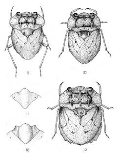 To NMNH Extant Collection (Illustration 002866)