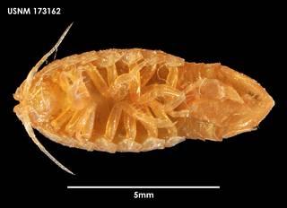 To NMNH Extant Collection (Heterophryxus elongatus 173162)