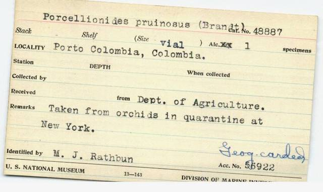 Catalouge Specimen Card for an Isopod Indentified by Mary J. Rathbun Collected in Porto Colombia, Co